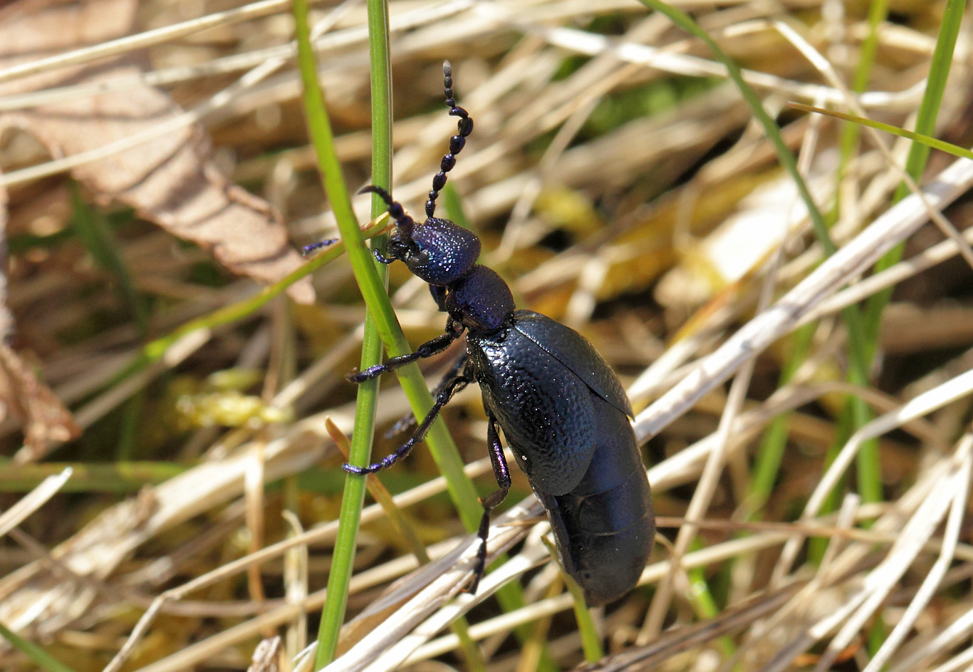 stikkende insekter danmark