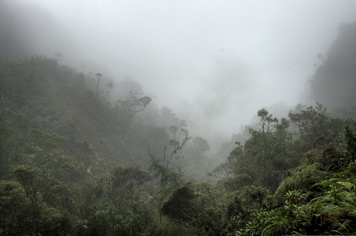 Cloud forest on the eastern slopes of the Andes at 2600 m altitude. Sacramento Alto. Yungas, Bolivia d. 6 January 2010. Photographer; Lars Andersen